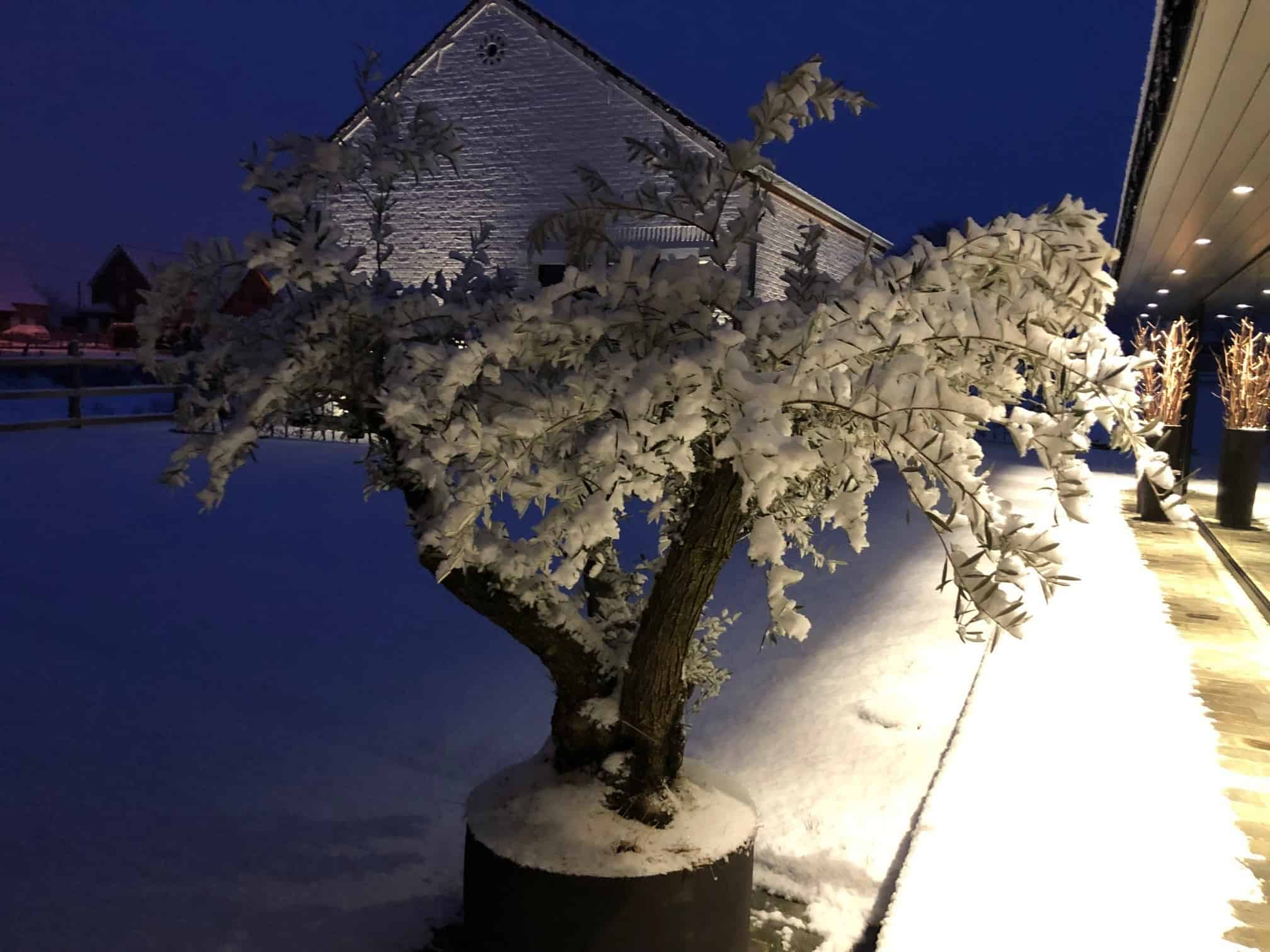 Tuin in de Winter
